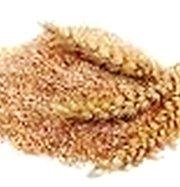 Отруби пшеничные,  с доставкой