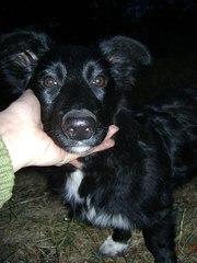 Симпатяга девочка щенок