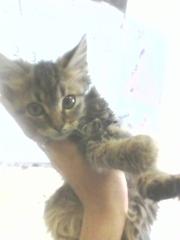 подарим красивого котика!
