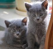 Отдадим солнечных котят